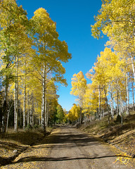 All The Difference (KGHofSF) Tags: aspen cavelake ely kgh kghofsf nevada schellmountains statepark successloop usa vegetation afternoon autumn day outside photo photograph photography seasons trees