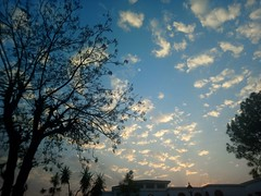 Silence of the afternoon (Somersaulting Giraffe) Tags: outdoor tree silhouette black sky blue cloud white building ngc branches arrival autumn