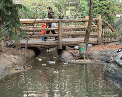 Rustic Wood Bridge over Duck Pond, Tisch Children's Zoo, Central Park, New York City (jag9889) Tags: 2018 20181112 bridge bridges bruecke brücke cp centralpark centralparkzoo crossing footbridge fussgängerbrücke holzbrücke infrastructure landmark manhattan ny nyc nycparks newyork newyorkcity outdoor park pedestrianbridge people pond pont ponte puente punt rustic span structure usa unitedstates unitedstatesofamerica water woodenbridge zoo jag9889 tischchildrenszoo