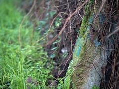 Concrete and moss. (Bond...Adrian Bond) Tags: grass green nature moss concrete