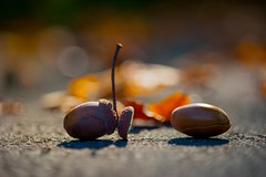 Painful farewell .. (milance1965) Tags: herbst autumn jesen abschied farewell vorbei nikon nikond700
