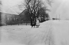 Winter in Scania (Ken-Zan) Tags: vinter skåne matte dog scanned kenzan ljunghav ia skåre