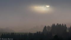 morning breaks (RCB4J) Tags: ayrshire irvinevalley rcb4j ronniebarron scotland sigma150500mmf563dgoshsm sonyilca77m2 art countryside landscape mist morning photography sunrise trees winter naturethroughthelens
