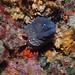 Morena, moray eel