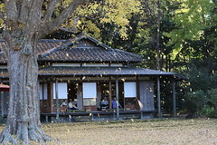 Falling Leaves (seiji2012) Tags: 東京 六義園 イチョウ 紅葉 tokyo rikugien garden leaves autumn happyplanet