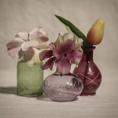 Still Life with Vases and Flowers (N.the.Kudzu) Tags: tabletop stilllife vases flowers canondslr canoneflens lightroom