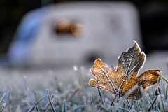 337/365 - Vegetable & Mineral (Winter's Here)! (Nikki M-F) Tags: caravan frost leaf light cold winter wales uk
