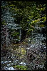 enter if you dare (D J England) Tags: djenglandphotography trees douglasjengland tree woods forest brucepeninsula canonpowershotg3x ontario southernontario dje djengland tobermory simpsonave