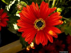 2677  Flores (Ricard Gabarrús) Tags: flores naturaleza natura jardin botanica ricardgabarrus olympus ricgaba