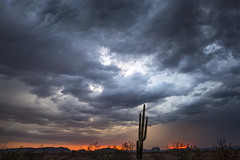 Yuzz Glikk Quan (Ramen Saha) Tags: clouds cloudsandmoods cloudformation saguaro sunsetcolors sky skyatdusk eveningsky desert arizona ramensaha