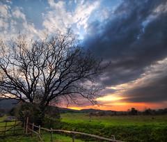 A sky in Tuscany (Robyn Hooz) Tags: nuvole tuscany toscana albero fence staccionata clouds cielo tramonto luce contrasto italia