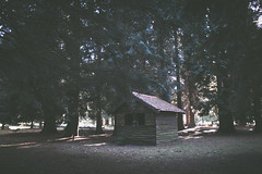 Retreat (music_man800) Tags: shed hut abandoned old rickety dilapidated decay rural countryside woods wood tree trees forests sunny light lighting dappled october day autumn fall norfolk uk united kingdom lynford arboretum filmy film effect nature natural scene walk hike half term canon 700d adobe lightroom creative cloud edit photography arty artistic cabin atmospheric atmosphere moody feels ambient