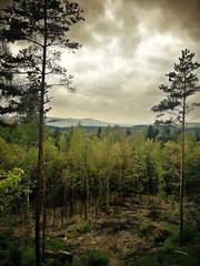 Landschaft im Neuensorger Forst nördlich von Michelau in Oberfranken (Maquarius) Tags: landschaft wald kiefer föhre pappel berg weite fernsicht wolken wipfel oberfranken franken