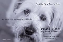 Charlie's New Year's Message (FidoPhoto (John McKeen)) Tags: dog dogphotographer dogphotography dogs nofireworks saynotofireworks fireworks mustlovedogs canine newyearmessage charlie petphotography petphotographer
