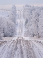 Make your mark (Tracey Rennie) Tags: alberta hoarfrost happynewyear cochrane tracks winter white new frost