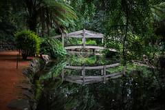 IMG_9873 (sarnovphoto) Tags: dandenong dandenongranges olinda sassafras rainforest trees canon canon60d lake water roadtrip victoria