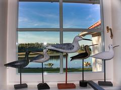 Schweden 08 300-1 (Andre56154) Tags: schweden sweden sverige fenster windows vogel möwe see lake wasser water
