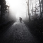 shadows in the mist thumbnail
