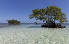 Souvenir , ( j en rêve encore ) !!! (Callie-02) Tags: baie mer ciel vacances rêve plénitude paysage 1018mm canon chaleur soleil turquoise bleu océan mercaraïbe eau plante arbre