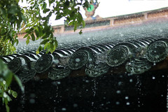 IMG_1546 (ythanhnguyen.vxl) Tags: rain vietnam hue flowers trees drop water