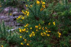 Peak Hill-1-14 (Sheptonian) Tags: somerset rural scenic landscape trees fauna grassland