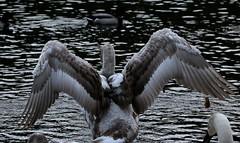 IMG_5105 (monika.carrie) Tags: monikacarrie wildlife scotland fyvie