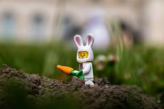 The spring rabbit (Ballou34) Tags: 2018 7dmark2 7dmarkii 7d2 7dii afol ballou34 canon canon7dmarkii canon7dii eos eos7dmarkii eos7d2 eos7dii flickr lego legographer legography minifigures photography stuckinplastic toy toyphotography toys osny îledefrance france fr stuck in plastic rabbit spring carrot disguise