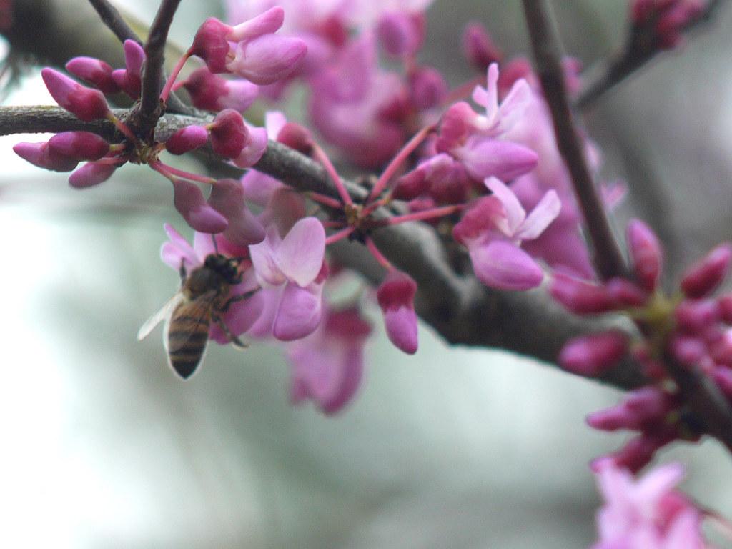 Ftb Magic Bees