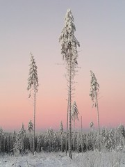 Winter greetings from Finland (Susanna Valkeinen) Tags: winter nature finland