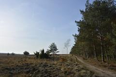 open_D711058 (Vogelmelk) Tags: veluwe bos herfst gelderland forest autumn nederland nature natuur