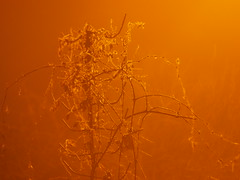 (Bohdan Tymo) Tags: helios mist ice cold winter night