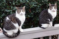 Ladybug and Cricket (Jim Atkins Sr) Tags: cats sony sonyphotographing sonya58 fairfieldharbour northcarolina
