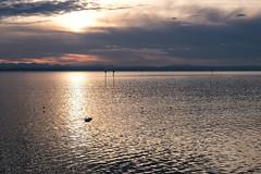 DSCF8481 (mibstudios) Tags: mibfoto bodensee lake fujifilm fujifilmxt3 michab100 landscape landschaft wasser water see badenwürttemberg deutschland sky clouds