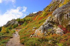Along the Trail (AdagioatMSN) Tags: yellow aster butte mount baker wilderness autumn fallcolors hiking