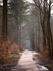 Forest Path (EmreKanik) Tags: trees stroll onepointperspective winter veluwe forest relaxing europe landscape netherlands epe gelderland nl