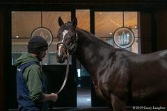 stallions image