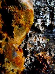 (bekasukhitashvili) Tags: tree branch bacteria