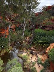 Garden of Eden, Kings Canyon (Harlz_) Tags: watarrkanationalpark kingscanyon northernterritory australia oasis desert centralaustralia landscape cycad wild untamed undeveloped outback canon 5dmarkii