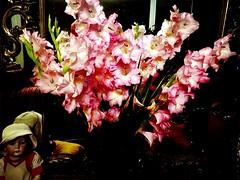 #HappyWeekendAll (RenateEurope) Tags: 2015 renateeurope iphoneography pink schwertblume gladiolus gladiolen flowers flora happyweekendall awesomeblossoms