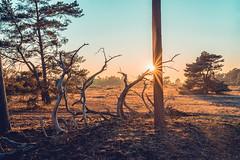After work shoot (Sjaco Manuputty) Tags: sun sunlight sunbeam sunflare rayoflights sunflares sunset hogeveluwe nationalpark nature park landscape landscapephotography trees sky shadows netherlands otterlo gelderland veluwe dehogeveluwe