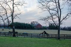 Waredaca Brewery, MD 19 (mixedeyes) Tags: autumn horse maryland