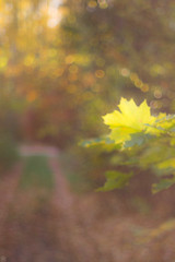 Autumn Impression (Slav.Burn) Tags: autumn october leaves sunlight colors green yellow bokeh forest woods trees pentaxart smcm50mmf14