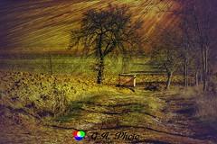 Il colore della primavera è nei fiori; il colore dell'inverno è nella fantasia!!! (Gianni Armano) Tags: il colore della primavera è nei fiori dell'inverno nella fantasia foto monferrato gianni armano photo flickr valmadonna