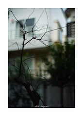2018/12/8 - 8/15 photo by shin ikegami. - SONY ILCE‑7M2 / Lomography New Jupiter 3+ 1.5/50 L39/M (shin ikegami) Tags: 紅葉 sky 空 シルエット silhouette 井の頭公園 吉祥寺 winter 冬 sony ilce7m2 sonyilce7m2 a7ii 50mm lomography lomoartlens newjupiter3 tokyo sonycamera photo photographer 単焦点 iso800 ndfilter light shadow 自然 nature 玉ボケ bokeh depthoffield naturephotography art photography japan earth asia