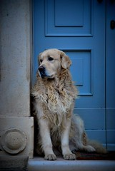 ..IO ASPETTO QUI : ) (ceriz_83) Tags: dog cane porta entrata casa