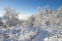 Snowy morning at Tintwistle (Keartona) Tags: tintwistle longdendale hills derbyshire peakdistrict england snow snowy winter january nature beautiful walk trees sunny sunshine weather stunning woodhead glossop