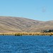 'The Dismal Swamp'- Lake Onslow, Central Otago