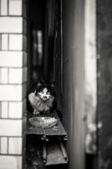 猫 (fumi*23) Tags: ilce7rm3 sony street sel55f18z 55mm sonnartfe55mmf18za sonnar zeiss a7r3 animal alley katze neko gato cat chat emount bw blackandwhite monochrome モノクロ ねこ 猫 ソニー