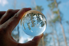 Upside Down In A Glass Ball. (dccradio) Tags: lumberton nc northcarolina robesoncounty outdoor outdoors outside nature tree trees bokeh nikon d40 dslr saturday saturdayafternoon winter january lensball ball glassball lensballphotography tensphy glassballphotography crystalball crystalballphotography woods sky bluesky backyard goodafternoon afternoon grass ground browngrass tallgrass weeds hand
