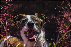 _LMV3631 (Lucio_Vecchio) Tags: delta nikond5500 nikon nikkor mascota retrato friend amigos perros animales naturaleza